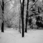 Zimowy spacer w rakietach śnieżnych po Beskidzie Gorlickim