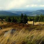 Przez Wysoki Grzbiet i izerskie torfowiska do Świeradowa Zdroju