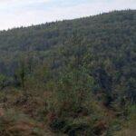 W Górach Bardzkich –  na Kłodzkiej Górze