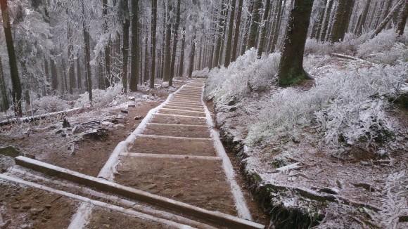 ścieżka na Sokolicę z Krowiarek