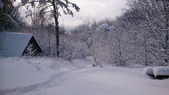 widok z siodełka pod szczytem Magury w stronę Jaworzyny Krynickiej