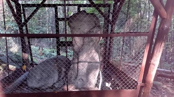 kultowe rzeźby przy szlaku na Wieżycę ogrodzone przed -wandalami - Dzik i Panna z rybą
