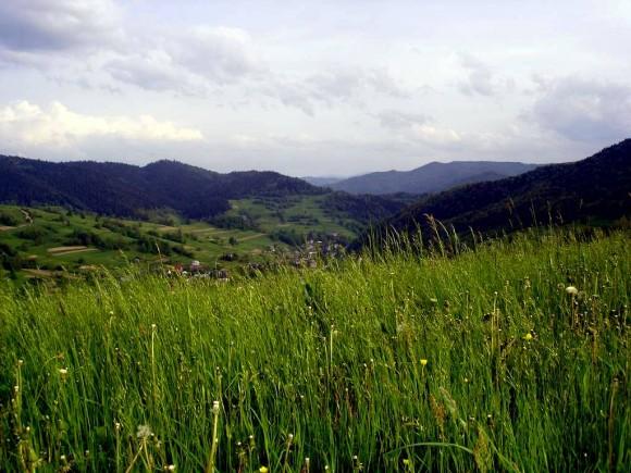 piękne łąki umajone nad Piwniczną Zdrojem