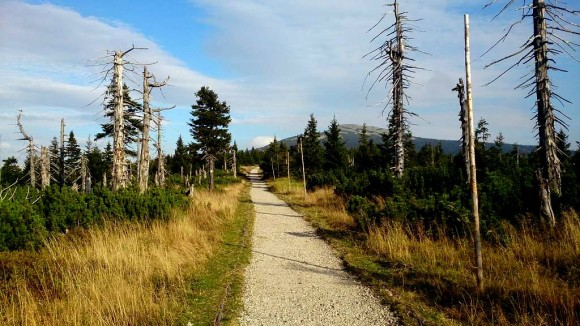 górska droga, tutaj karkonoska czasami może być wspólna dla drugiego wędrowca