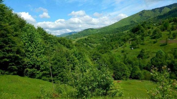 zielone Karpaty Ukraińskie
