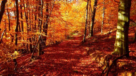 jesienny las w Bieszczadach