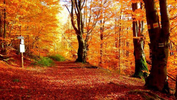 leśny dywan i rozejście szlaków na Krysowej