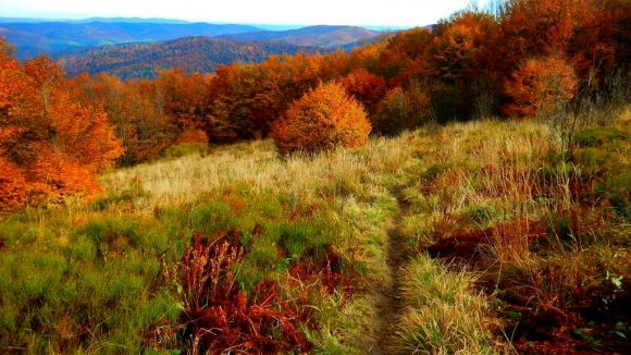 płonące lasy i trawy Bieszczadów