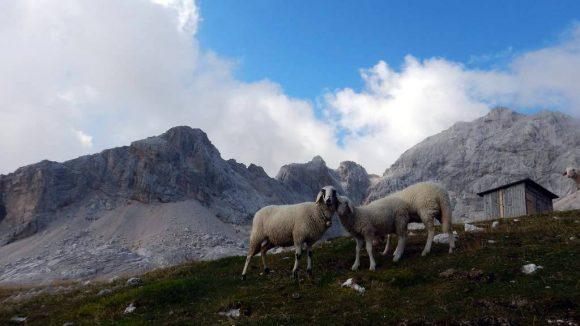 bezczelne owieczki i Triglav z prawej oraz Rjavec z tyłu