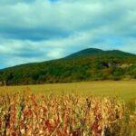 Zaruby, Hawrania Skała, Ostry Kamień i jaskinia Driny- cuda Małych Karpat