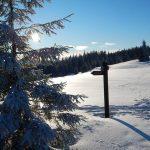 Zimowy spacer ścieżką Doliny Gorcowego Potoku na Gorc Troszacki